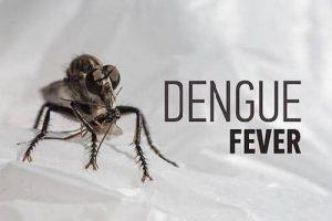 fever of dengu s