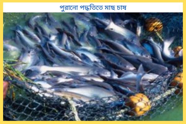 পুরানো পদ্ধতিতে মাছ চাষে কি কি সমস্যা হয়