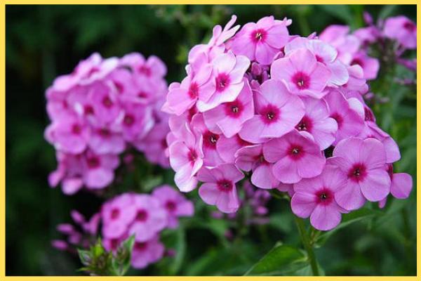 শীতকালীন ফুল (Winter flowers)